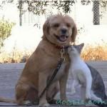 Кошка ластится об собаку