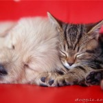Кошка спит со щенком