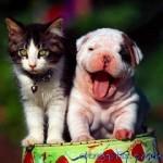 Очень маленький щенок и котёнок