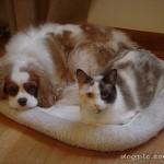 Один коврик на двоих