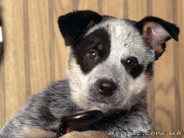 Пятнистый щеночек