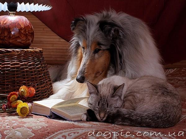 Пёс читает, а кошка спит