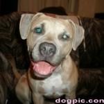 Пёс с зелёными глазами