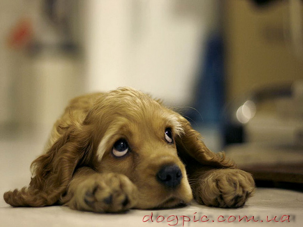 красивые картинки щенки