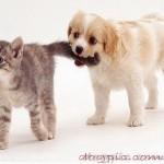 Собака держит кота за хвост