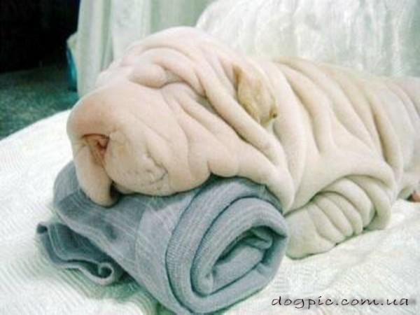 Собака-полотенце