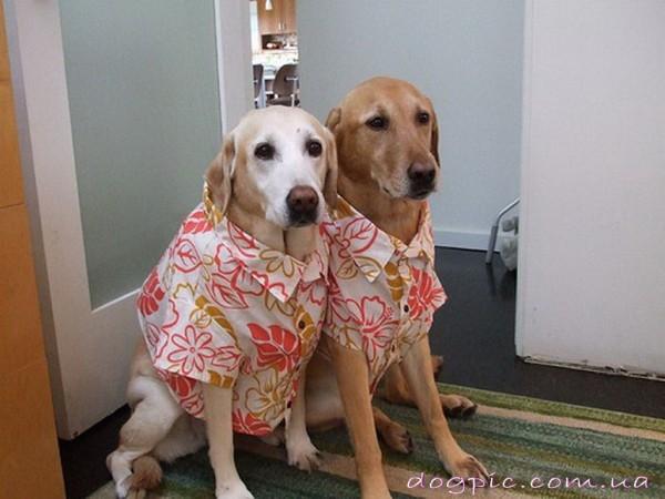 Собаки в гавайских рубашках