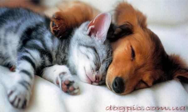 Тузик и кицька в сладком сне