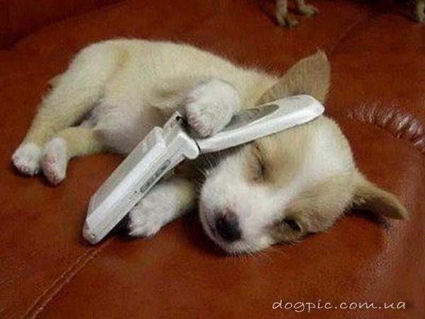 Тузик с телефоном