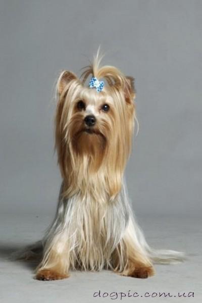 Я самая красивая собака