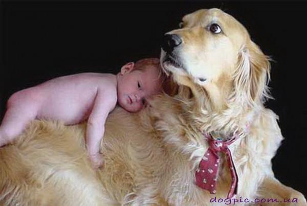 Ребёнок на большой собаке
