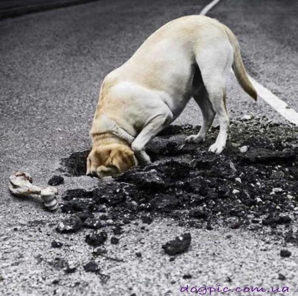 Собака разрыла асфальт