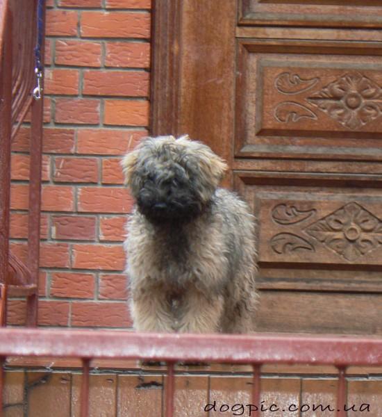Фото смешного щенка Пули