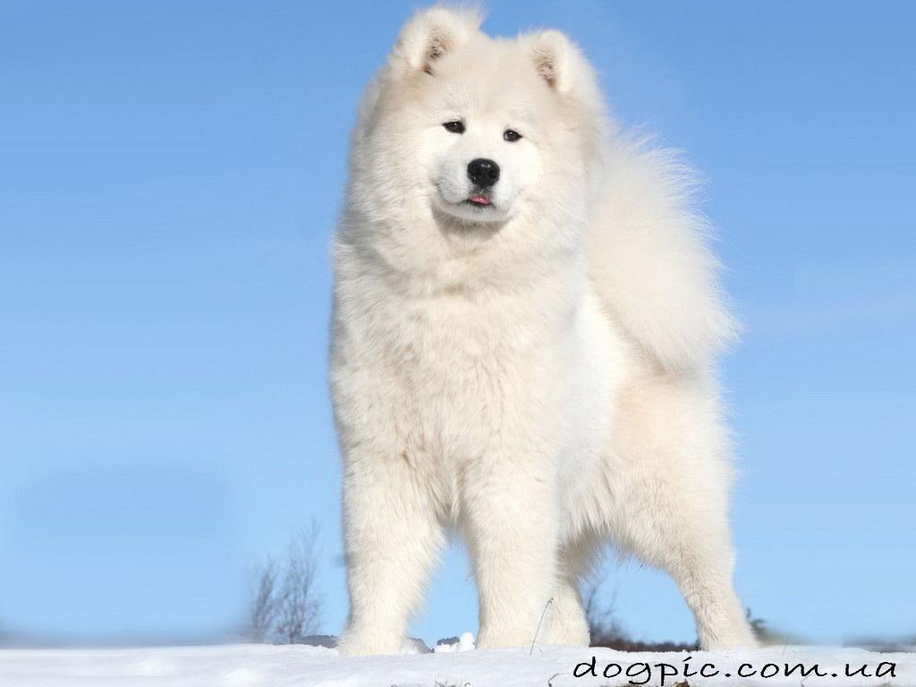 Собаки прикольные фото собак и щенков