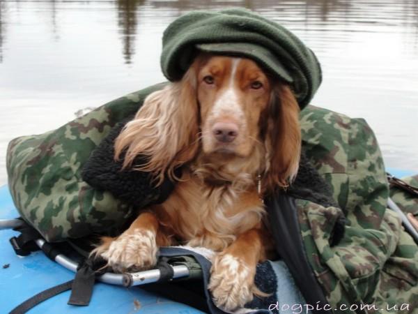 Русский спаниель на рыбалке в лодке