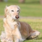 Фото очень красивой собаки породы салюки