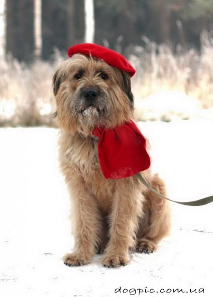 Прикольный бриар в красной шапке и шарфе